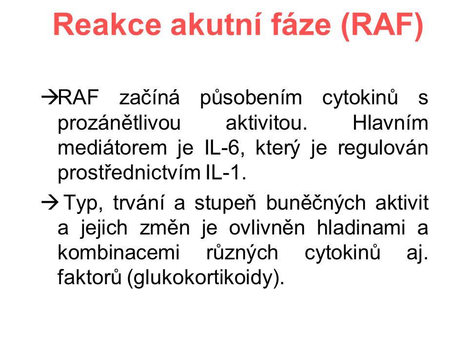 Reakce akutní fáze (RAF)  RAF začíná působením cytokinů s prozánětlivou aktivitou.