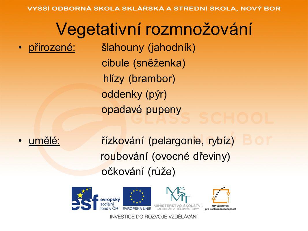 Vegetativní rozmnožování přirozené: šlahouny (jahodník) cibule (sněženka) hlízy (brambor) oddenky (pýr) opadavé pupeny umělé:řízkování (pelargonie, ry