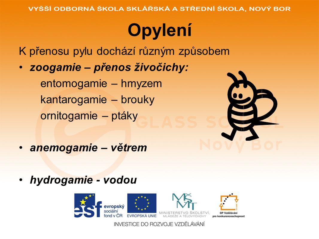 Opylení K přenosu pylu dochází různým způsobem zoogamie – přenos živočichy: entomogamie – hmyzem kantarogamie – brouky ornitogamie – ptáky anemogamie