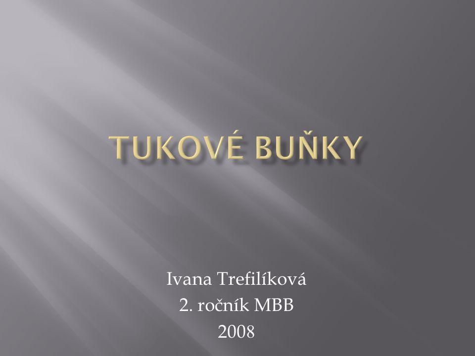 Ivana Trefilíková 2. ročník MBB 200 8