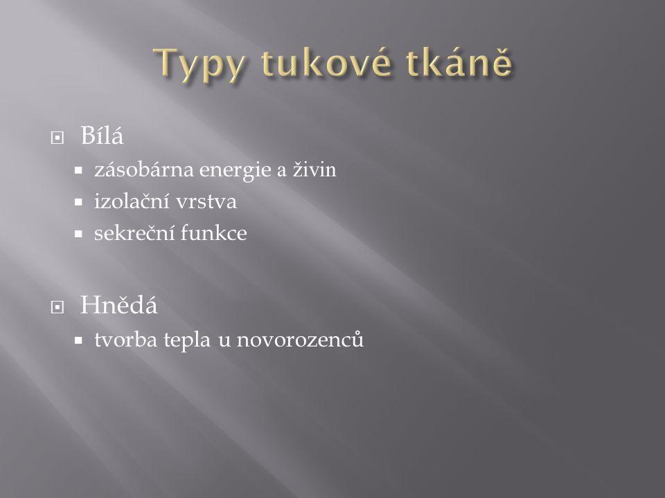 www.divemed.sk