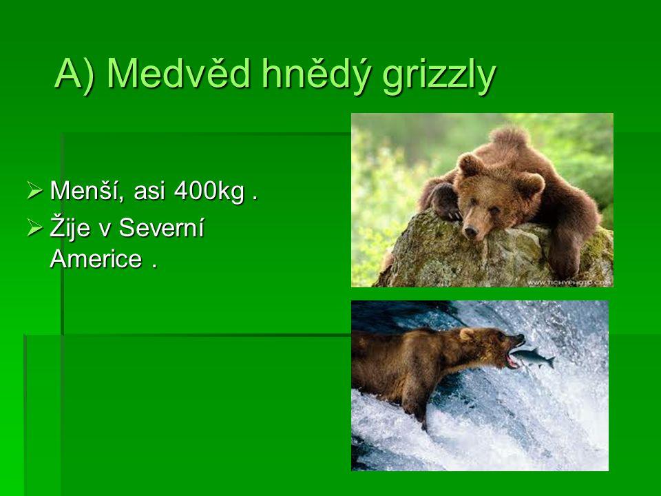 A) Medvěd hnědý grizzly  Menší, asi 400kg.  Žije v Severní Americe.