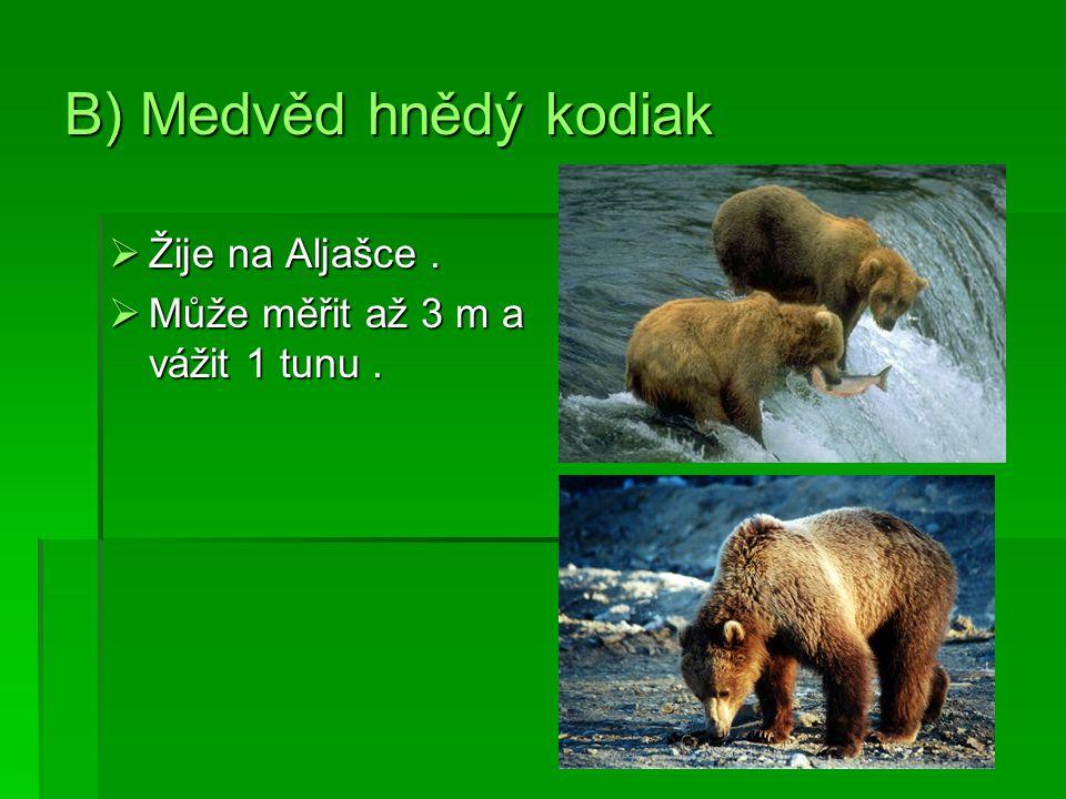 B) Medvěd hnědý kodiak  Žije na Aljašce.  Může měřit až 3 m a vážit 1 tunu.