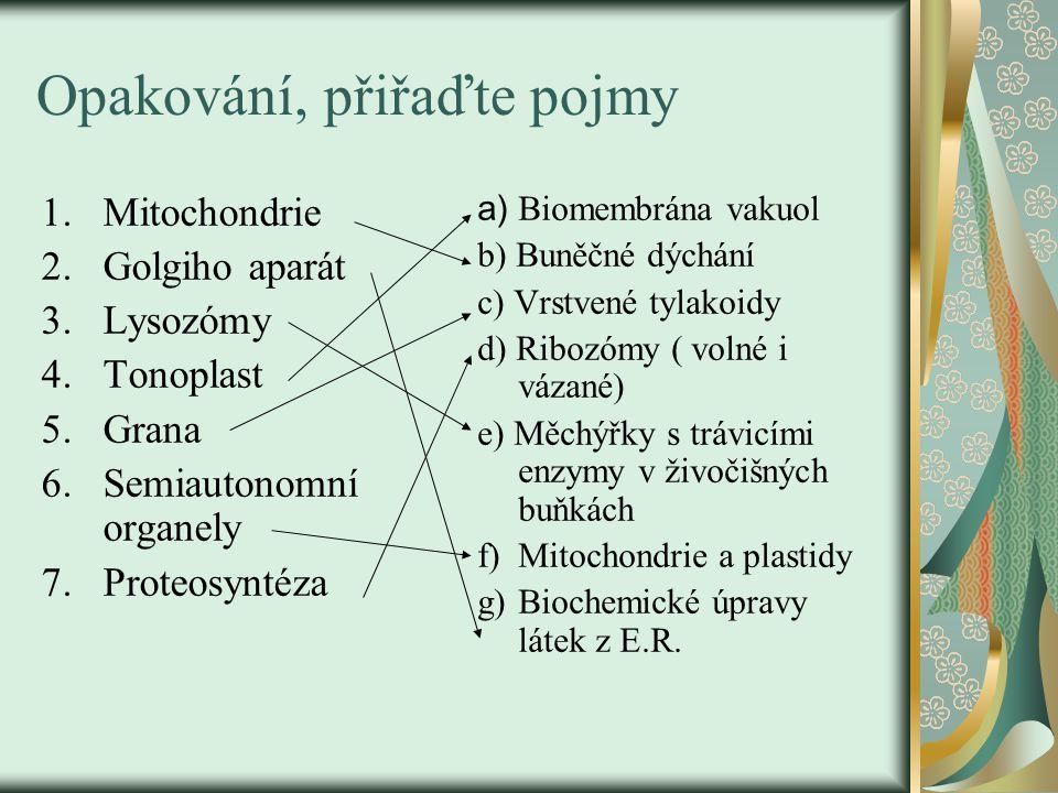 Opakování, přiřaďte pojmy 1.Mitochondrie 2.Golgiho aparát 3.Lysozómy 4.Tonoplast 5.Grana 6.Semiautonomní organely 7.Proteosyntéza a) Biomembrána vakuol b) Buněčné dýchání c) Vrstvené tylakoidy d) Ribozómy ( volné i vázané) e) Měchýřky s trávicími enzymy v živočišných buňkách f)Mitochondrie a plastidy g)Biochemické úpravy látek z E.R.