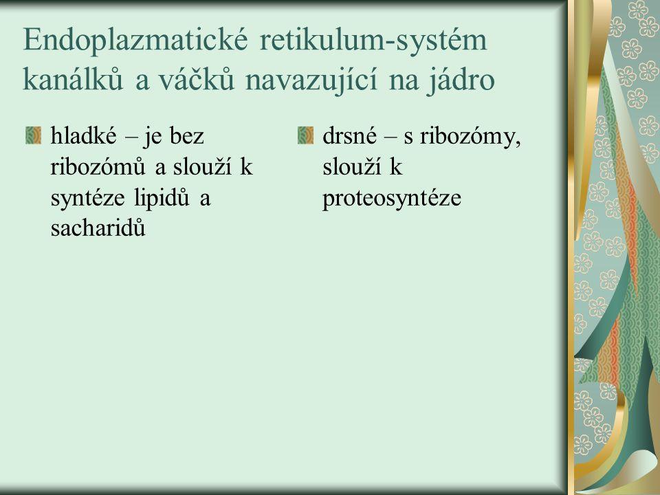 Vakuola v buňce – obr.č.8.