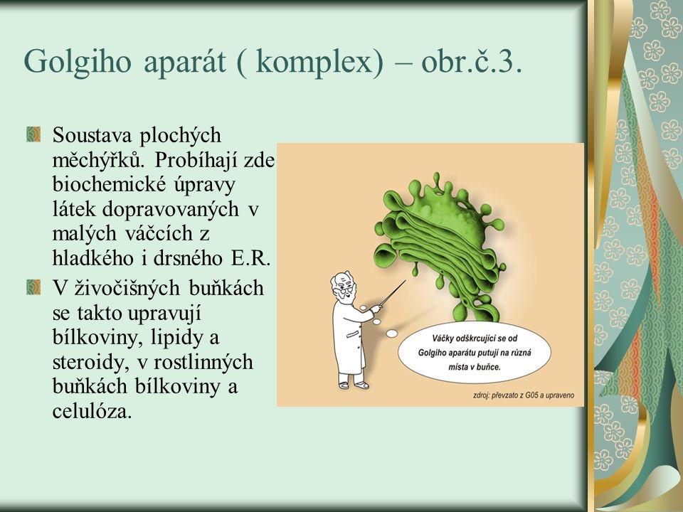 Golgiho aparát ( komplex) – obr.č.3. Soustava plochých měchýřků. Probíhají zde biochemické úpravy látek dopravovaných v malých váčcích z hladkého i dr
