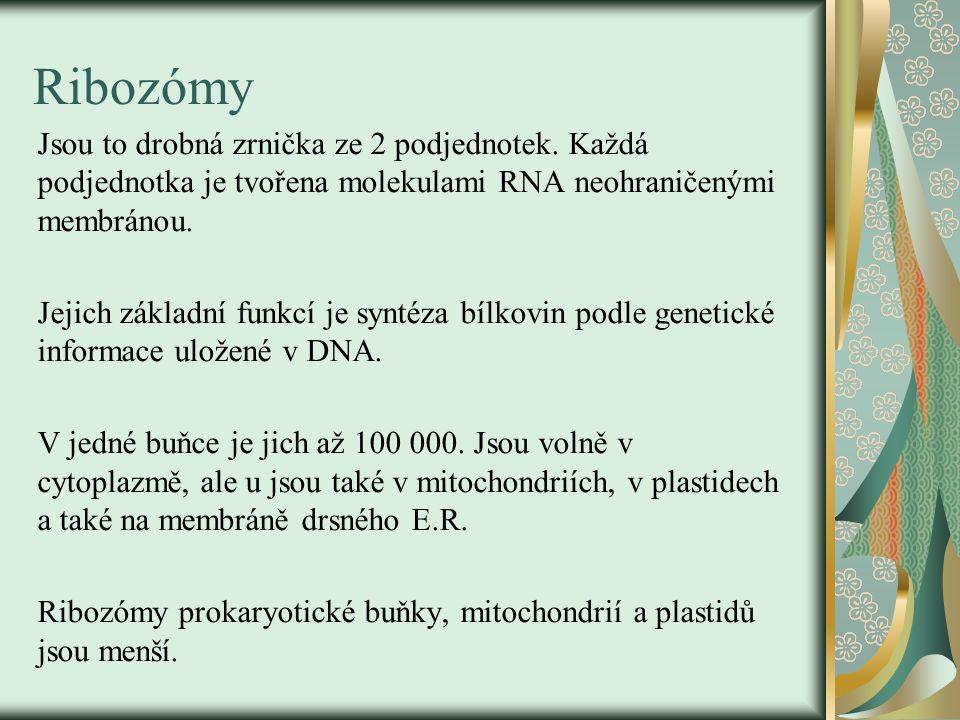 Ribozómy Jsou to drobná zrnička ze 2 podjednotek. Každá podjednotka je tvořena molekulami RNA neohraničenými membránou. Jejich základní funkcí je synt