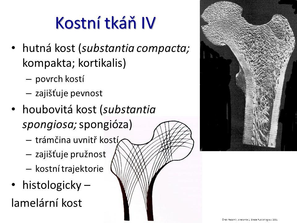 Kostní tkáň IV hutná kost (substantia compacta; kompakta; kortikalis) – povrch kostí – zajišťuje pevnost houbovitá kost (substantia spongiosa; spongió