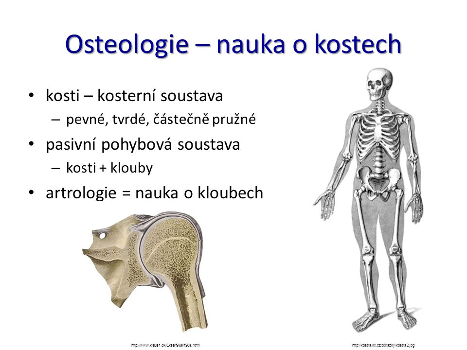 Osteologie – nauka o kostech kosti – kosterní soustava – pevné, tvrdé, částečně pružné pasivní pohybová soustava – kosti + klouby artrologie = nauka o