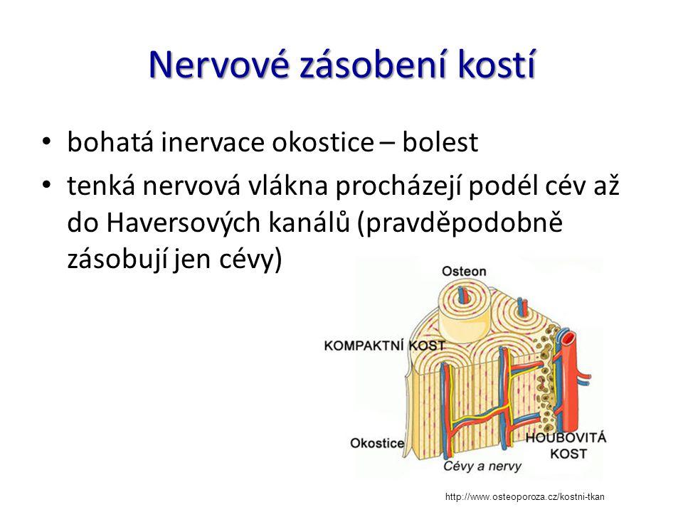 Nervové zásobení kostí bohatá inervace okostice – bolest tenká nervová vlákna procházejí podél cév až do Haversových kanálů (pravděpodobně zásobují je