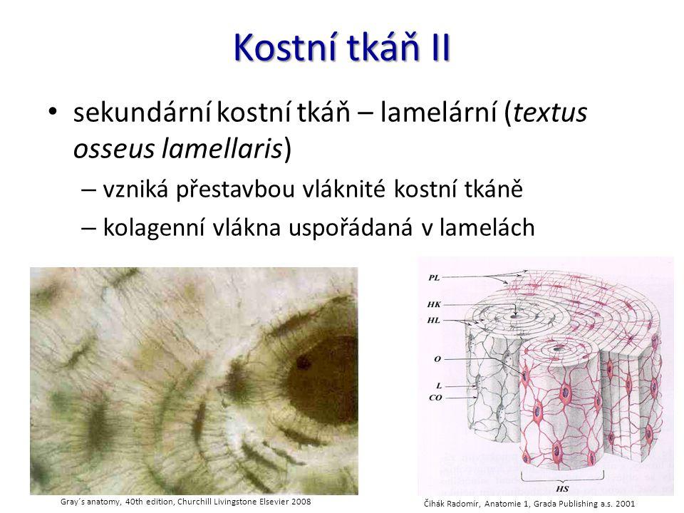 Kostní tkáň III Haversovy lamely (lamellae osseae) – podélné lamely koncentricky uspořádané kolem Haversových kanálů (canales osteoni) – izotropní x anizotropní vrstvy povrchové lamely (lamellae circumferentiales externae) (= plášťové lamely) – vznik apozicí intersticiální lamely (lamellae interstitiales)