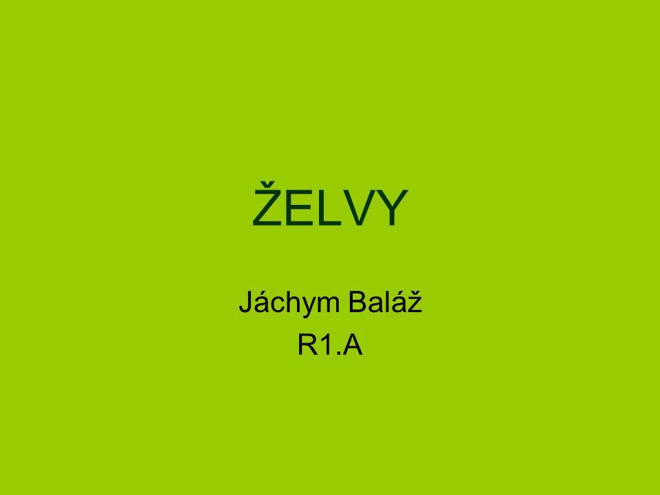 ŽELVY Jáchym Baláž R1.A