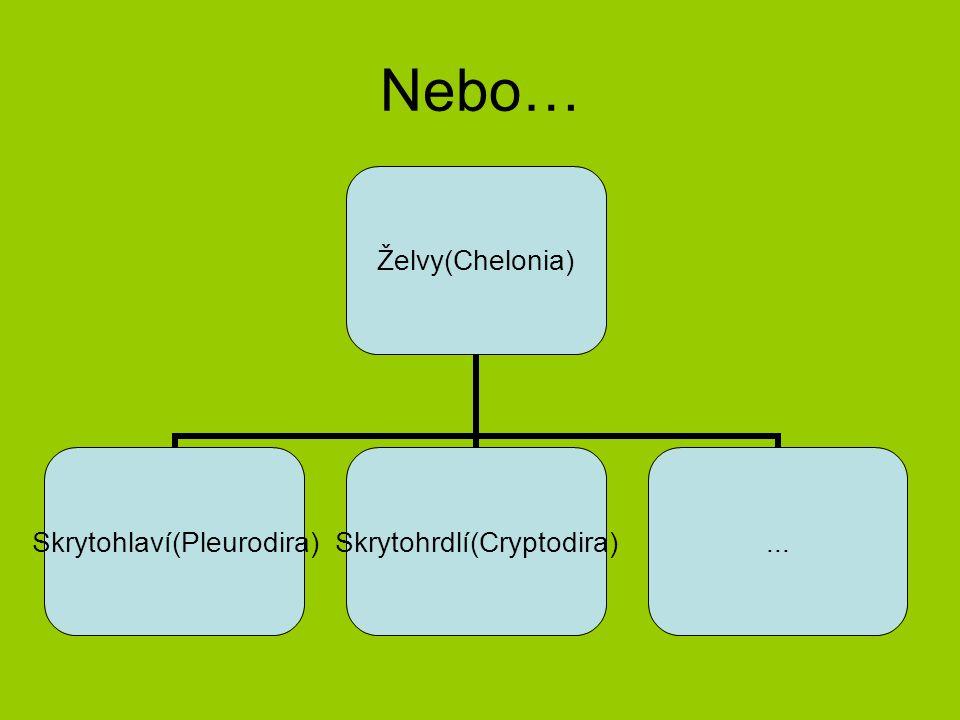 Nebo… Želvy(Chelonia) Skrytohlaví(Pleurodira)Skrytohrdlí(Cryptodira)...