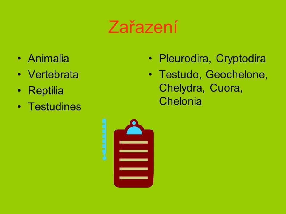 Zařazení Animalia Vertebrata Reptilia Testudines Pleurodira, Cryptodira Testudo, Geochelone, Chelydra, Cuora, Chelonia