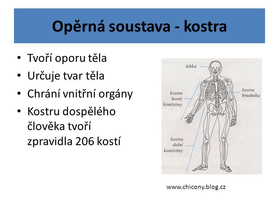 Opěrná soustava - kostra Tvoří oporu těla Určuje tvar těla Chrání vnitřní orgány Kostru dospělého člověka tvoří zpravidla 206 kostí www.chicony.blog.cz