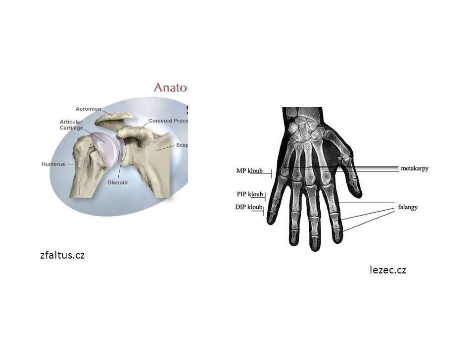 Stavba kosti Okostice – vazivová blána na povrchu Hutná kostní tkáň – nejpevnější část kostry – Je pod okosticí Houbovitá kostní tkáň Kostní dřeň – tvoří vnitřek dlouhých kostí – Vytvářejí se v ní krvinky