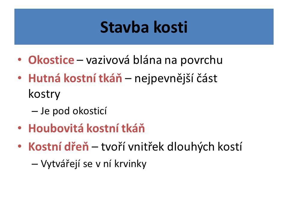 www.kamama.estranky.cz
