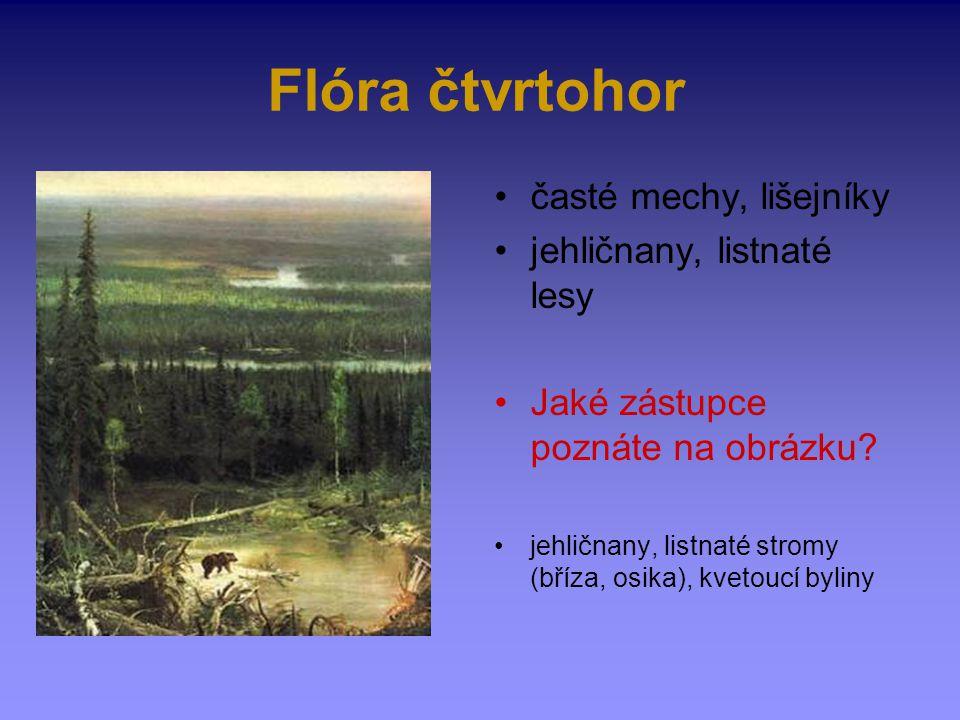 Flóra čtvrtohor časté mechy, lišejníky jehličnany, listnaté lesy Jaké zástupce poznáte na obrázku? jehličnany, listnaté stromy (bříza, osika), kvetouc