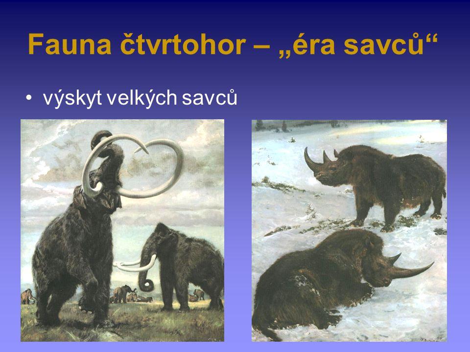 """Fauna čtvrtohor – """"éra savců"""" výskyt velkých savců"""