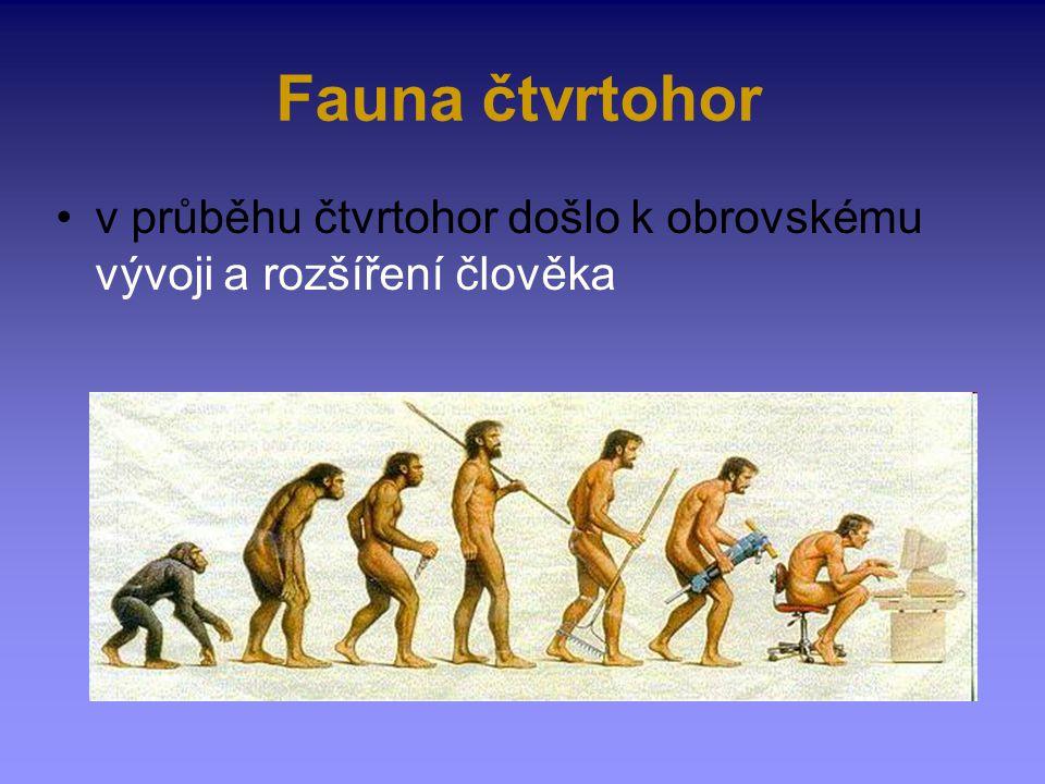 Fauna čtvrtohor v průběhu čtvrtohor došlo k obrovskému vývoji a rozšíření člověka