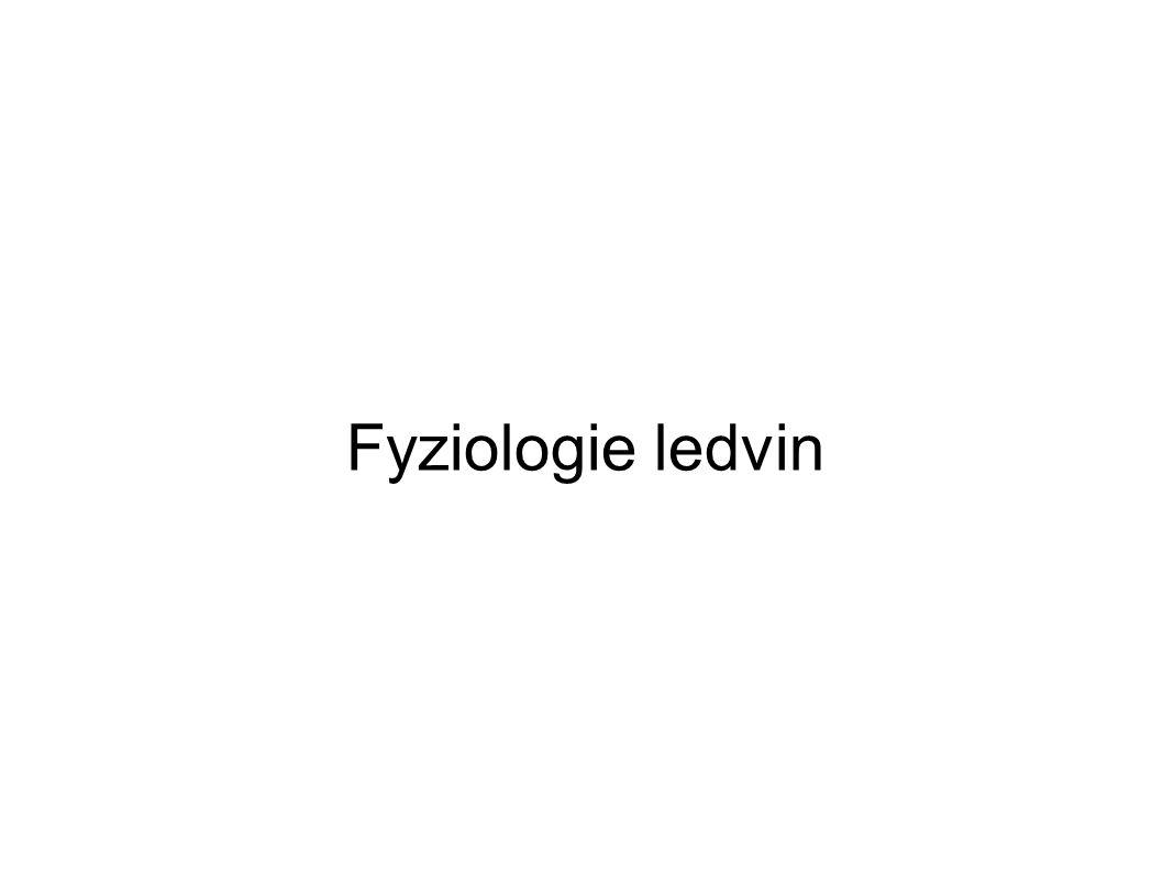 Fyziologie ledvin
