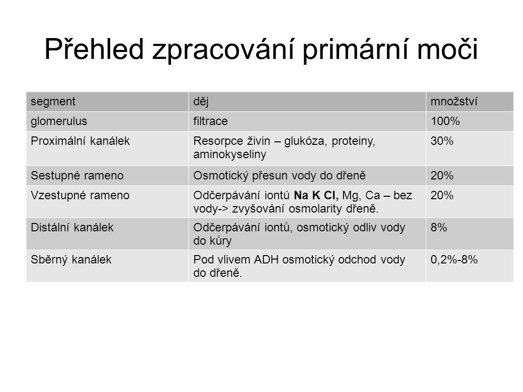 Přehled zpracování primární moči segmentdějmnožství glomerulusfiltrace100% Proximální kanálekResorpce živin – glukóza, proteiny, aminokyseliny 30% Ses