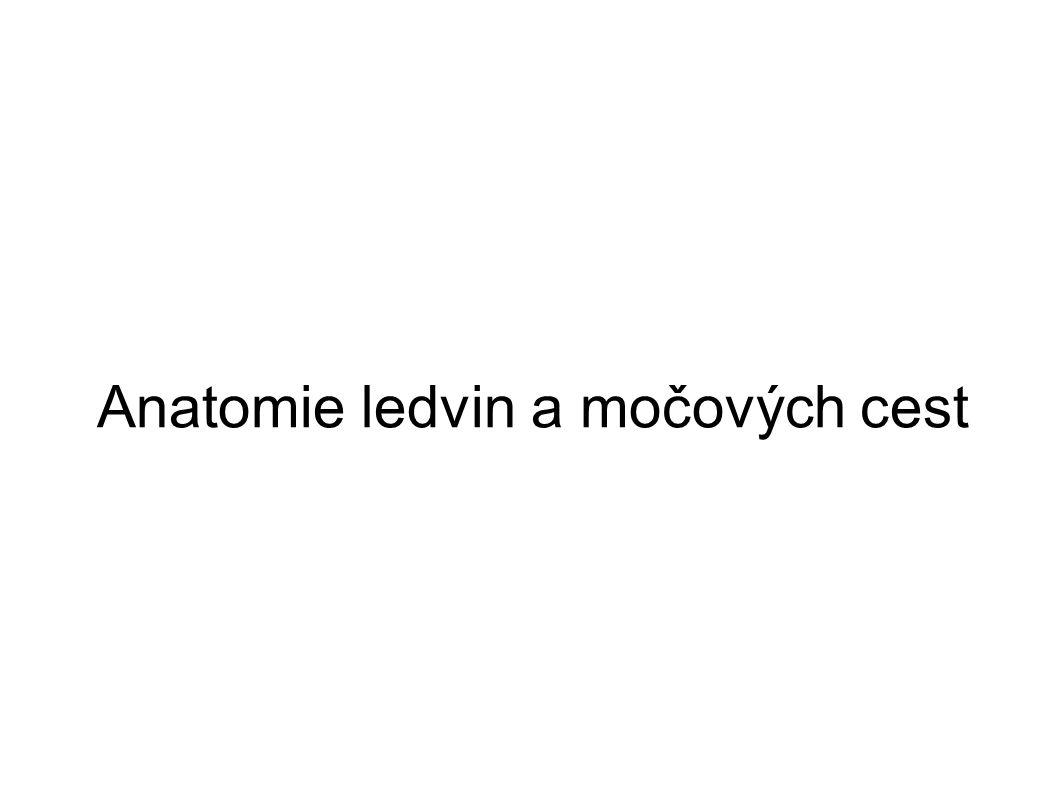 Svěrač Močový měchýř Ledviny Svěrač Močovod Močová trubice http://kidney.niddk.nih.gov/kudiseases/pubs/yoururinary /