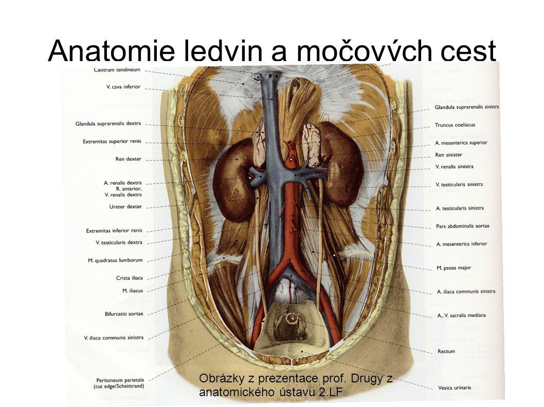 Uložení ledvin Retroperitoneálně = Mezi pobřišnicí a zádovým svalstvem V tukovém pouzdře
