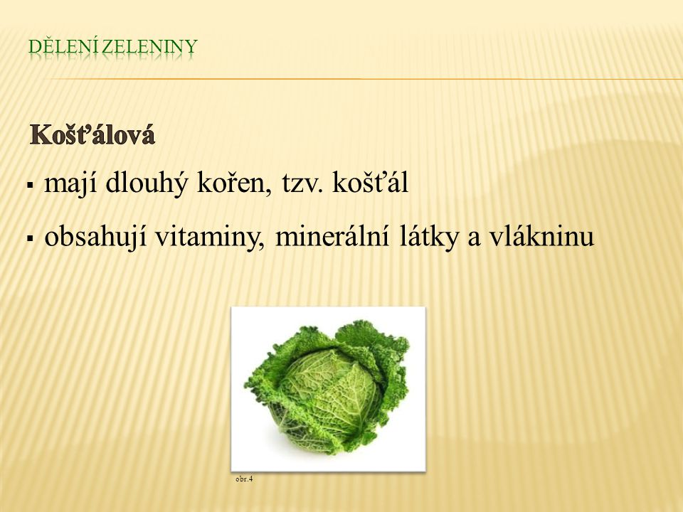  mají dlouhý kořen, tzv. košťál  obsahují vitaminy, minerální látky a vlákninu obr.4