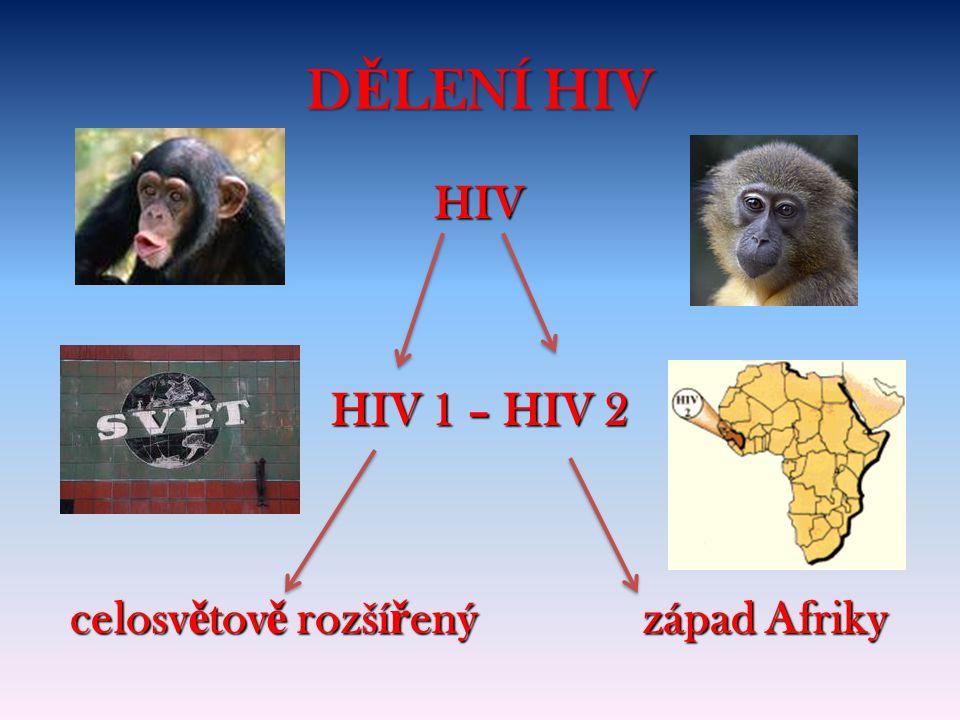 D Ě LENÍ HIV HIV HIV 1 – HIV 2 celosv ě tov ě rozší ř ený západ Afriky celosv ě tov ě rozší ř ený západ Afriky