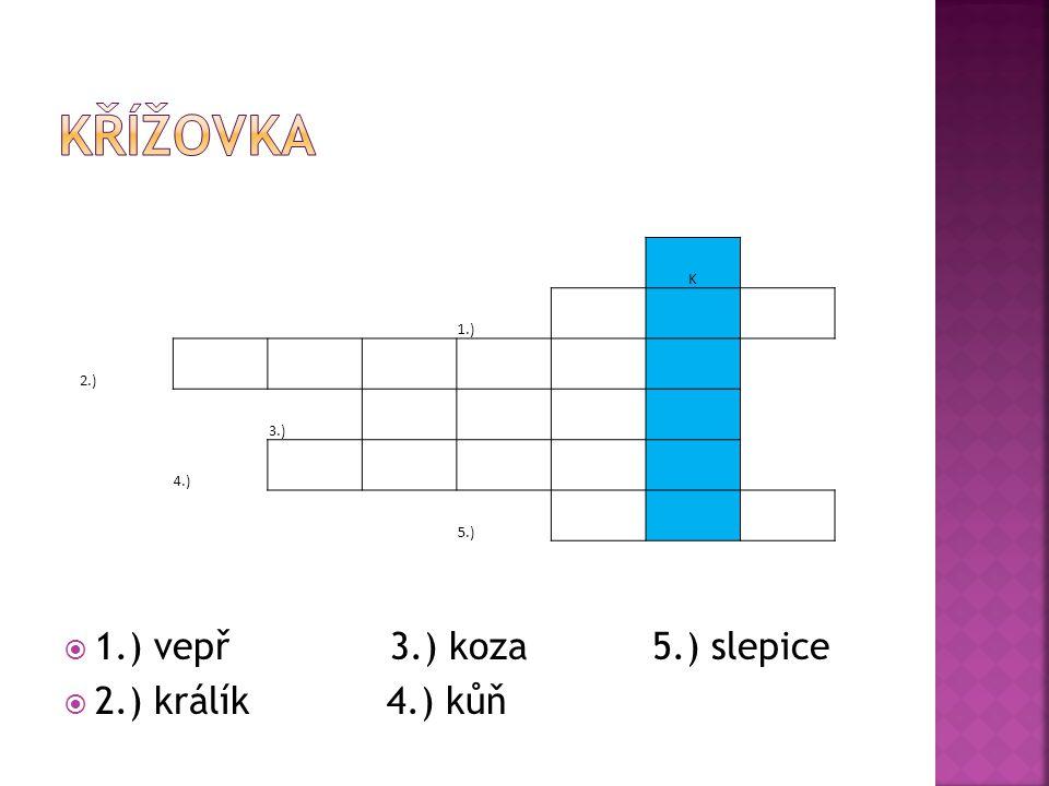  1.) vepř 3.) koza 5.) slepice  2.) králík 4.) kůň K 1.) 2.) 3.) 4.) 5.)