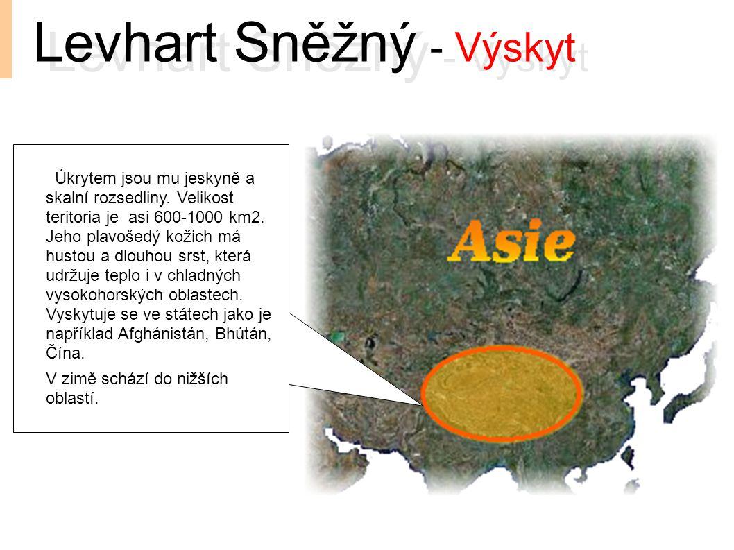 Levhart Sněžný - Výskyt Úkrytem jsou mu jeskyně a skalní rozsedliny. Velikost teritoria je asi 600-1000 km2. Jeho plavošedý kožich má hustou a dlouhou