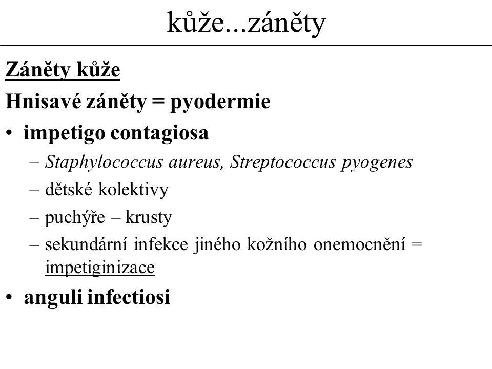 kůže...záněty Záněty kůže Hnisavé záněty = pyodermie impetigo contagiosa –Staphylococcus aureus, Streptococcus pyogenes –dětské kolektivy –puchýře – krusty –sekundární infekce jiného kožního onemocnění = impetiginizace anguli infectiosi