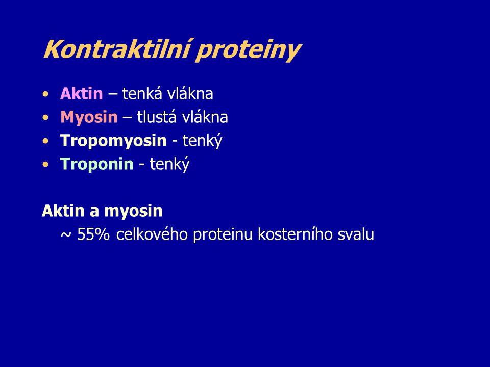 Kontraktilní proteiny Aktin – tenká vlákna Myosin – tlustá vlákna Tropomyosin - tenký Troponin - tenký Aktin a myosin ~ 55% celkového proteinu kostern