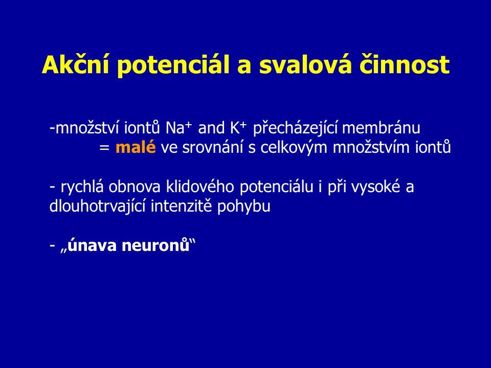 """Akční potenciál a svalová činnost -množství iontů Na + and K + přecházející membránu = malé ve srovnání s celkovým množstvím iontů - rychlá obnova klidového potenciálu i při vysoké a dlouhotrvající intenzitě pohybu - """"únava neuronů"""