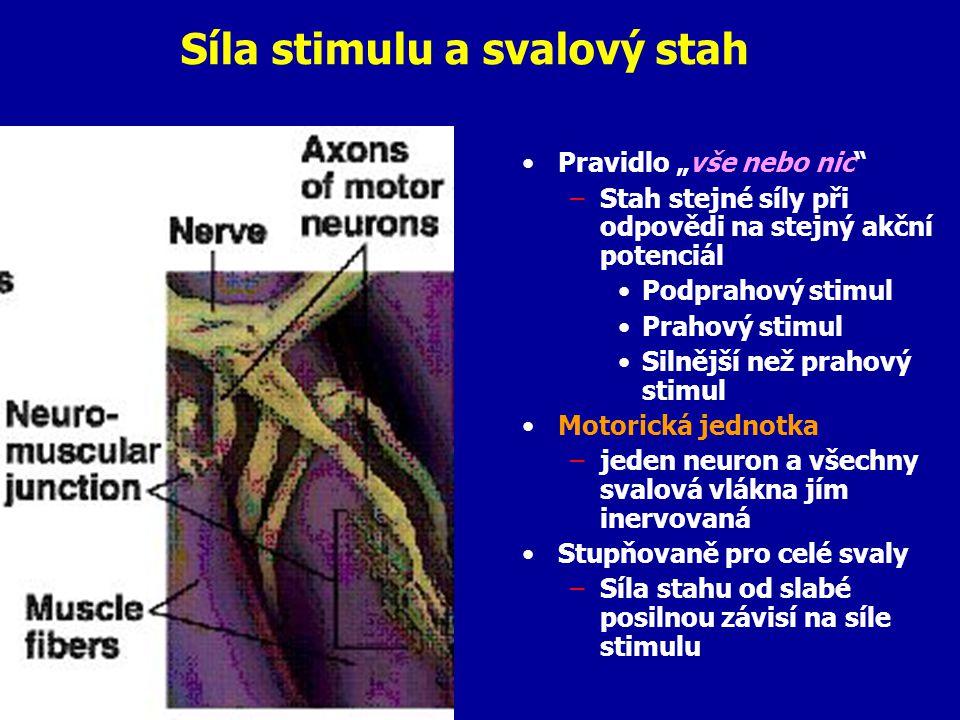 """Síla stimulu a svalový stah Pravidlo """"vše nebo nic –Stah stejné síly při odpovědi na stejný akční potenciál Podprahový stimul Prahový stimul Silnější než prahový stimul Motorická jednotka –jeden neuron a všechny svalová vlákna jím inervovaná Stupňovaně pro celé svaly –Síla stahu od slabé posilnou závisí na síle stimulu"""