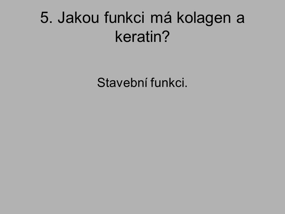 5. Jakou funkci má kolagen a keratin? Stavební funkci.
