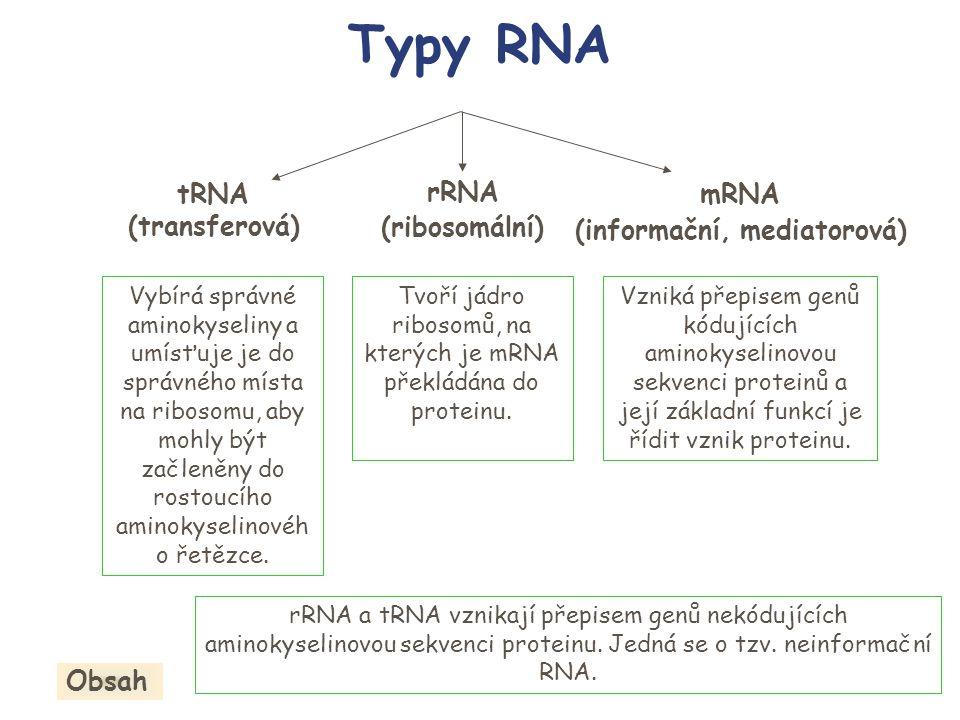 mRNA rRNA tRNA Vzniká přepisem genů kódujících aminokyselinovou sekvenci proteinů a její základní funkcí je řídit vznik proteinu.