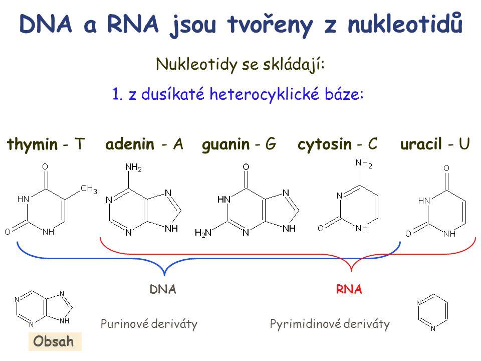 Nukleotidy se skládají: adenin - Aguanin - Gcytosin - C thymin - T 1.