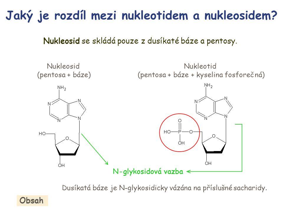 Nukleosid se skládá pouze z dusíkaté báze a pentosy.