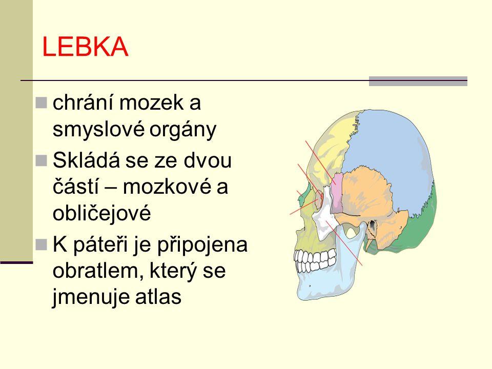 LEBKA chrání mozek a smyslové orgány Skládá se ze dvou částí – mozkové a obličejové K páteři je připojena obratlem, který se jmenuje atlas