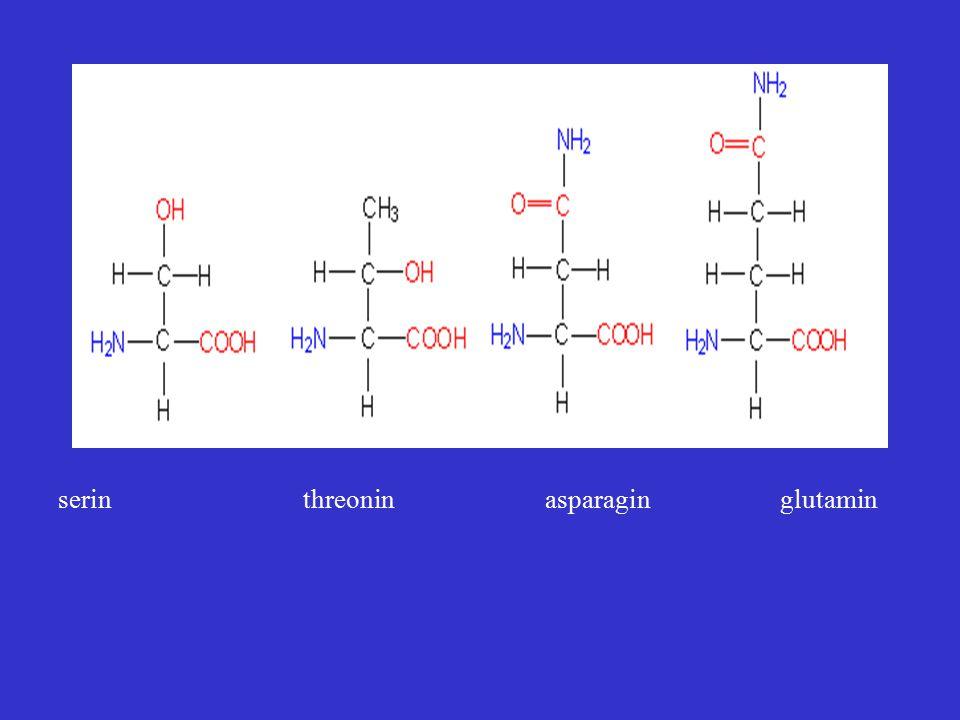 serin threonin asparagin glutamin