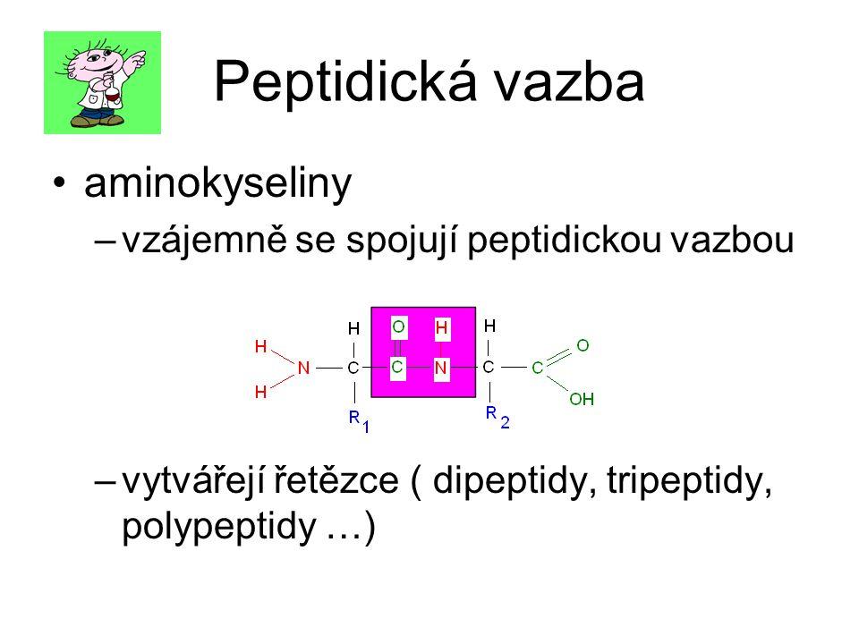 Peptidická vazba aminokyseliny –v–vzájemně se spojují peptidickou vazbou –v–vytvářejí řetězce ( dipeptidy, tripeptidy, polypeptidy …)