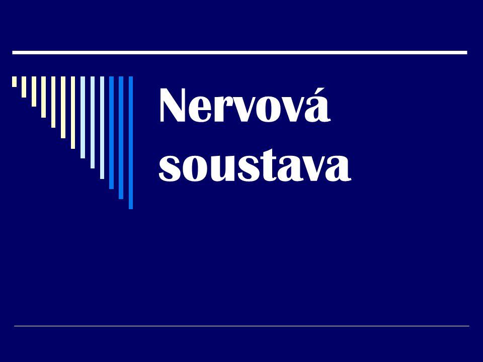 Nervová soustava se skládá z:  Centrálního nervstva  Periferního nervstva