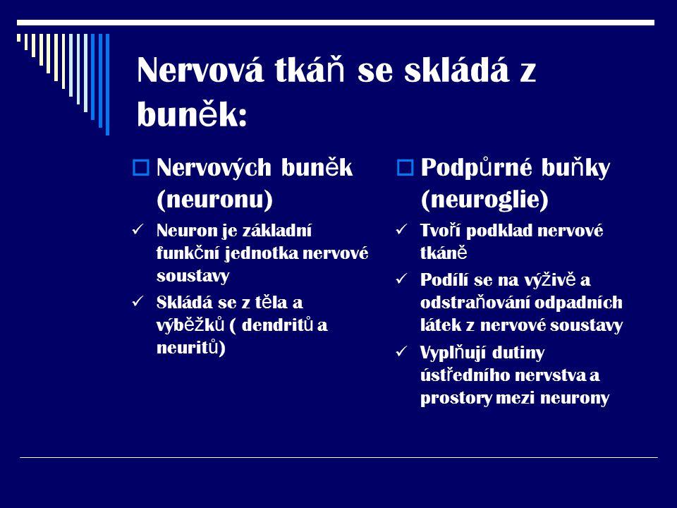 Nervová tká ň se skládá z bun ě k:  Nervových bun ě k (neuronu) Neuron je základní funk č ní jednotka nervové soustavy Skládá se z t ě la a výb ěž k