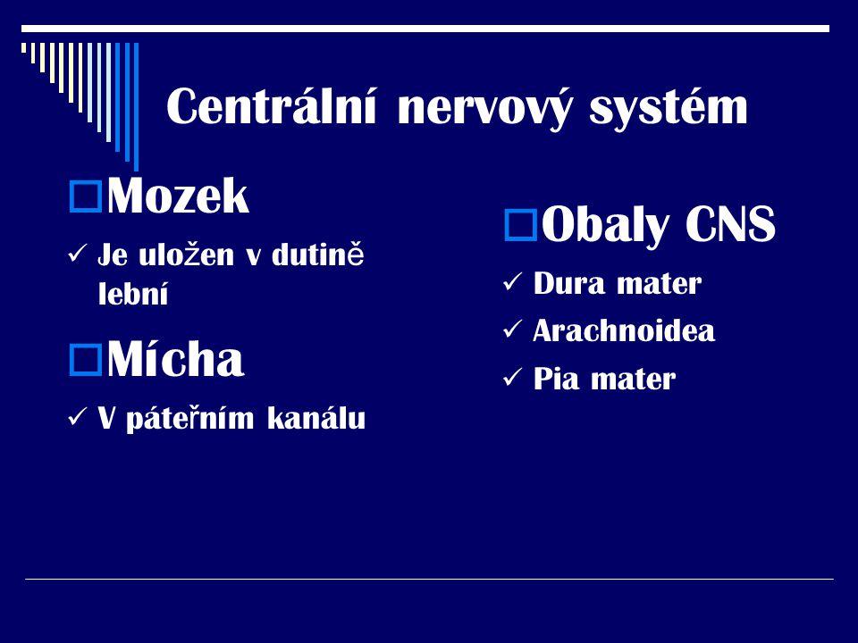 Mícha (medula spinalis)  Funkce P ř evodní reflexní  Nervová vlákna Motorická Senzitivní vegetativní