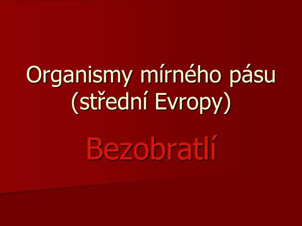 Odkazy: včelahttp://www.gymta.cz/kabinety/kab_biologie/videoatlas/hmyz/blanokridli.html včelahttp://www.gymta.cz/kabinety/kab_biologie/videoatlas/hmyz/blanokridli.htmlhttp://www.gymta.cz/kabinety/kab_biologie/videoatlas/hmyz/blanokridli.html Přispěvatelé Wikipedie, Žížaly [online], Wikipedie: Otevřená encyklopedie, c2012, Datum poslední revize 31.