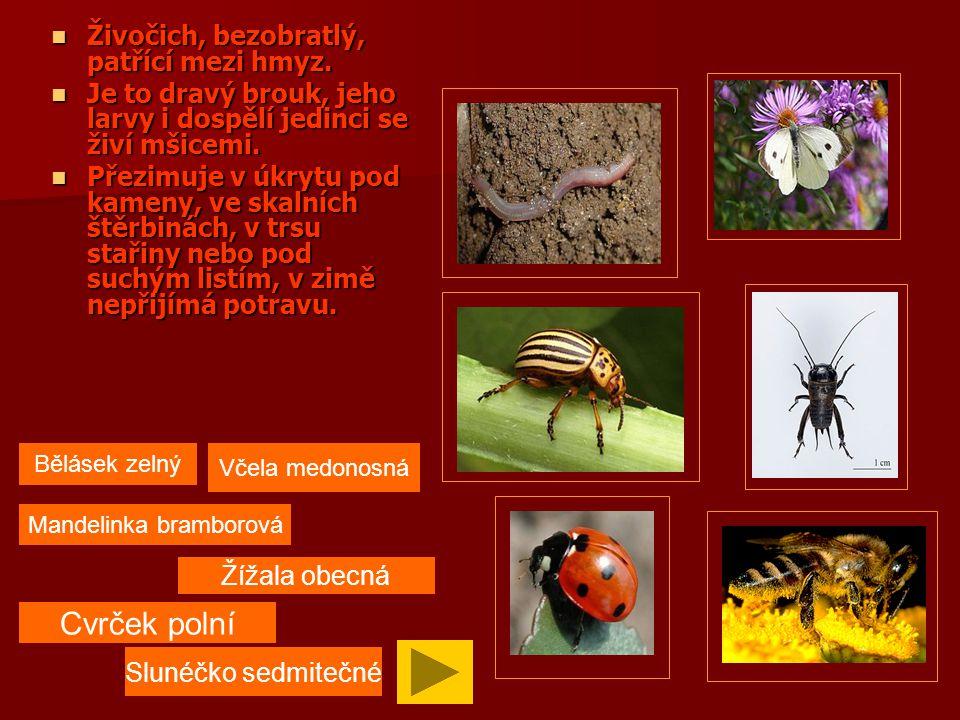 Živočich, patří mezi bezobratlé, hmyz.Živočich, patří mezi bezobratlé, hmyz.