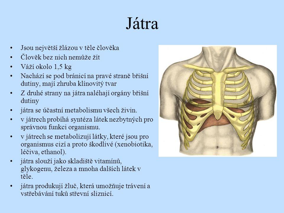 Játra Jsou největší žlázou v těle člověka Člověk bez nich nemůže žít Váží okolo 1,5 kg Nachází se pod bránicí na pravé straně břišní dutiny, mají zhru