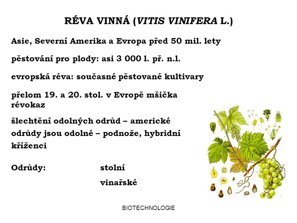 """BIOTECHNOLOGIE VLASTNOSTI VÍNA """"Víno je lék. Hippokratés, Plinius, Paracelsus Francouzský paradox: umírněná, ale pravidelná konzumace vede ke snížení rizika onemocnění srdce a cév kvercetin resveratrol polyfenolické antioxidanty – flavonoidy, konzumace malého množství (do 30 g) ethanolu denně"""
